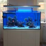 Veikiantis Jūrinis akvariumas