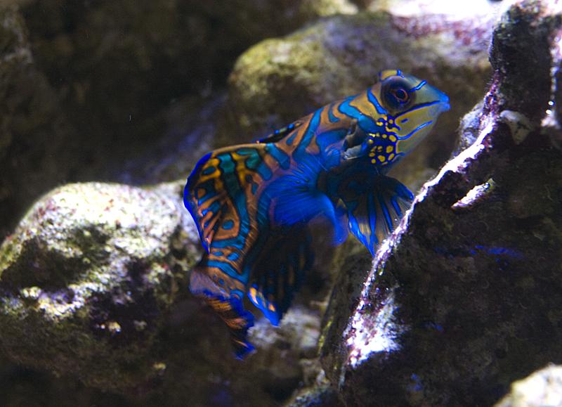 jurinio akvariumo irengimas
