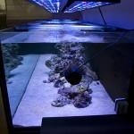 1500ltr akvariumas